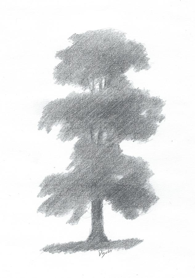 Elm Tree Drawing Number One Painting by Alan Daysh