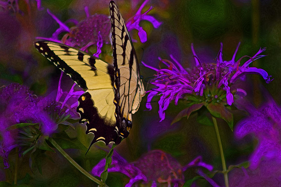 Butterfly Photograph - Elusive Butterfly Of Love by Mamie Thornbrue