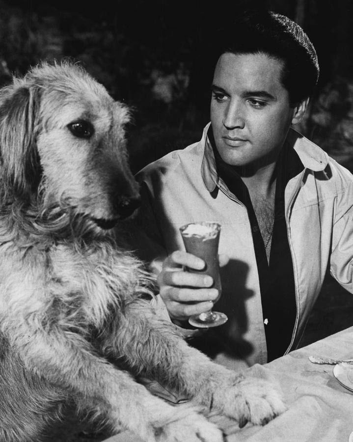 Elvis Presley Has A Milkshake With Dog Photograph By Retro