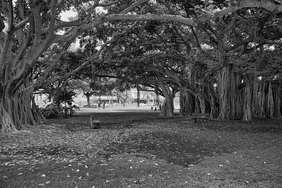 Park Benches Photograph - Embraced By Trees by Douglas Barnard