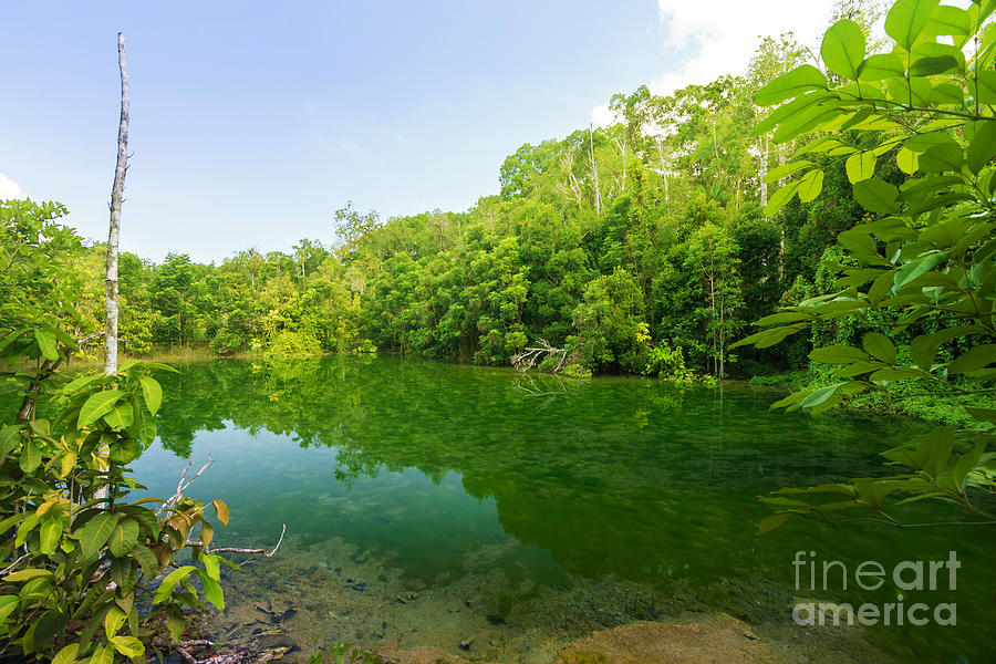 Adventure Photograph - Emerald Pool by Atiketta Sangasaeng
