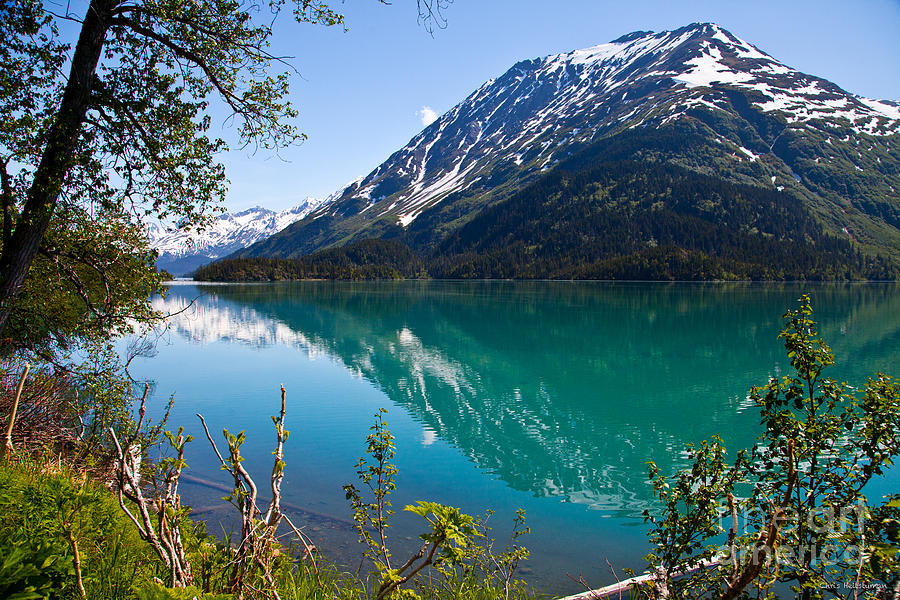 Alaska Photograph - Emerald Reflections  by Chris Heitstuman