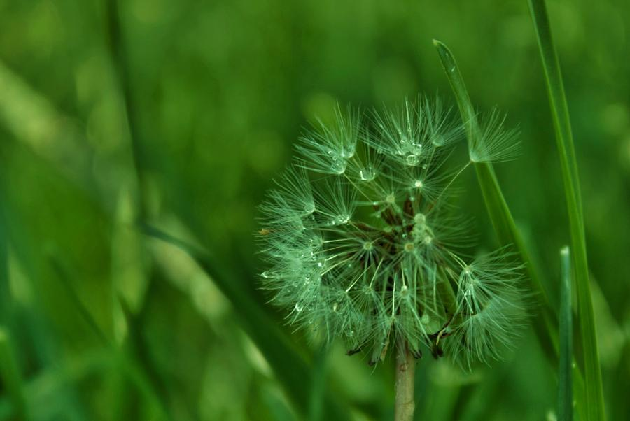 Nature Photograph - Emeralds by Anna  McAlister