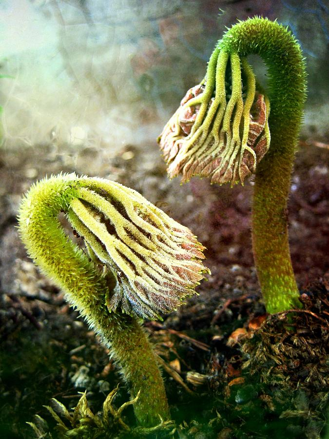 Seasonal Photograph - Emerging Sprouts by Shirley Sirois