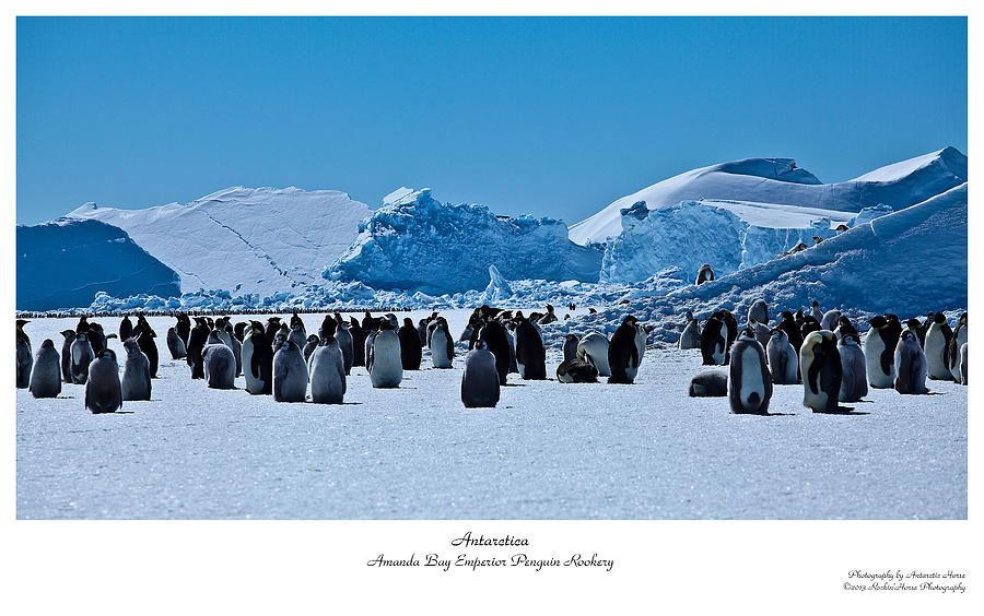 Antarctic Landscape Photograph - Emperor Penguin Rookery by David Barringhaus