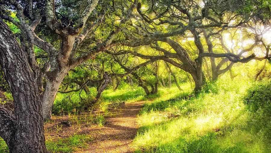 Oaks Photograph - Enchanted by Aron Kearney