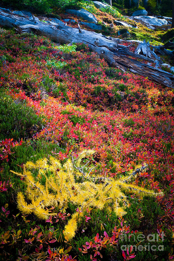 Alpine Lakes Wilderness Photograph - Enchanted Colors by Inge Johnsson