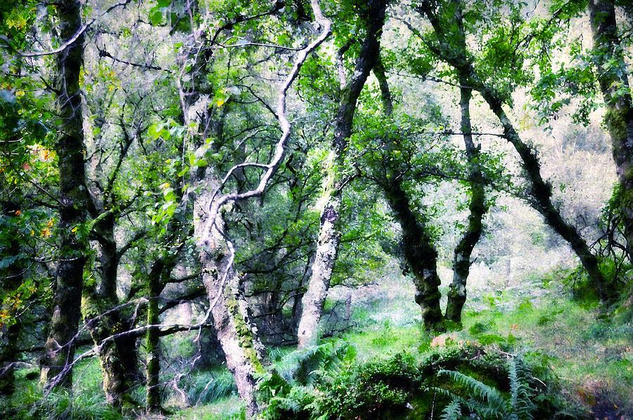 Ireland Photograph - Enchanted Forest. The Kingdom Of Thetrees. Glendalough. Ireland by Jenny Rainbow