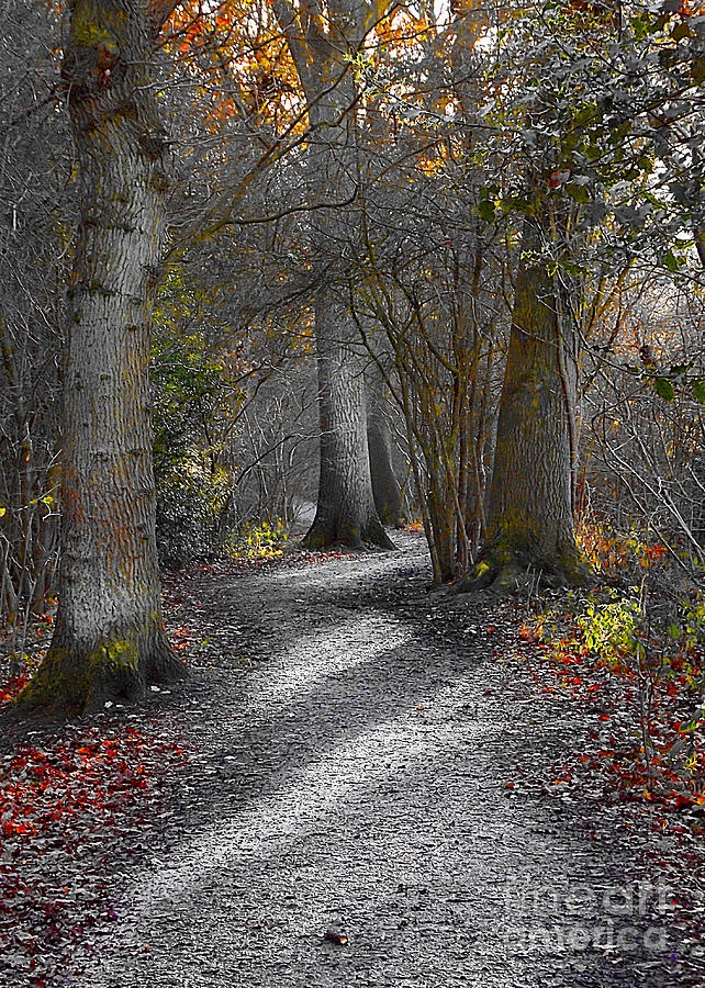 Forests Photograph - Enchanted Woods by Linsey Williams