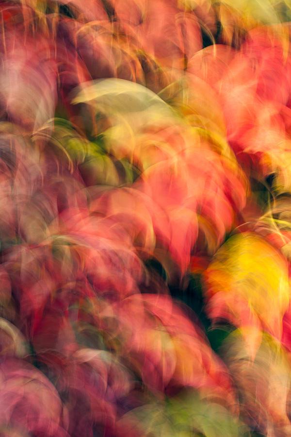 Leaves Photograph - Enchantment No.7 by Daniel Csoka