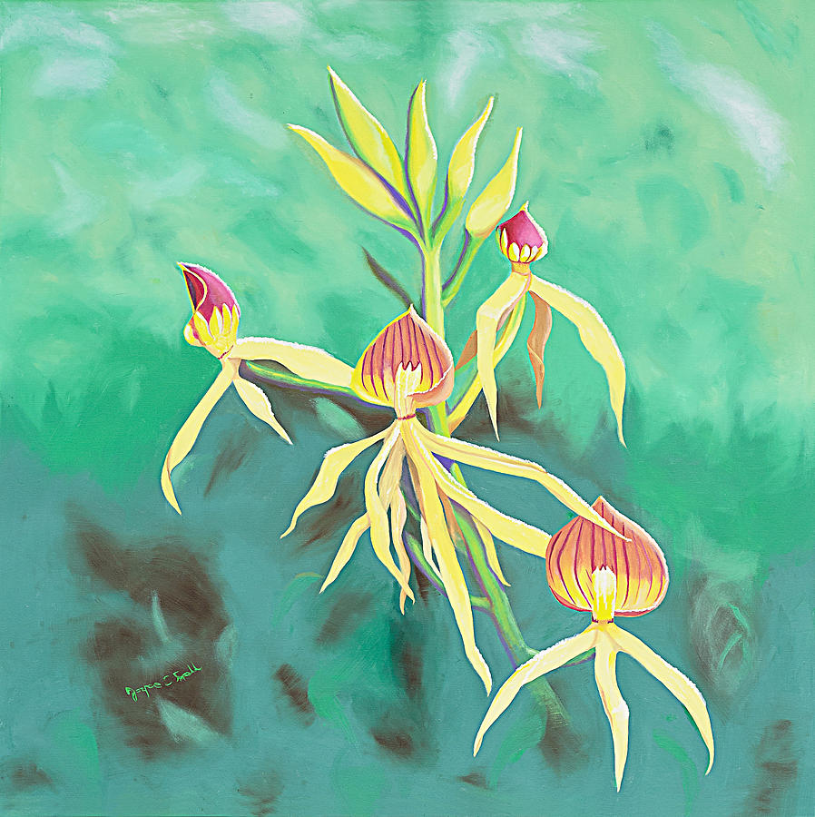 Orchid Painting - Encyclia Cochleata Orchid by Joyce Small