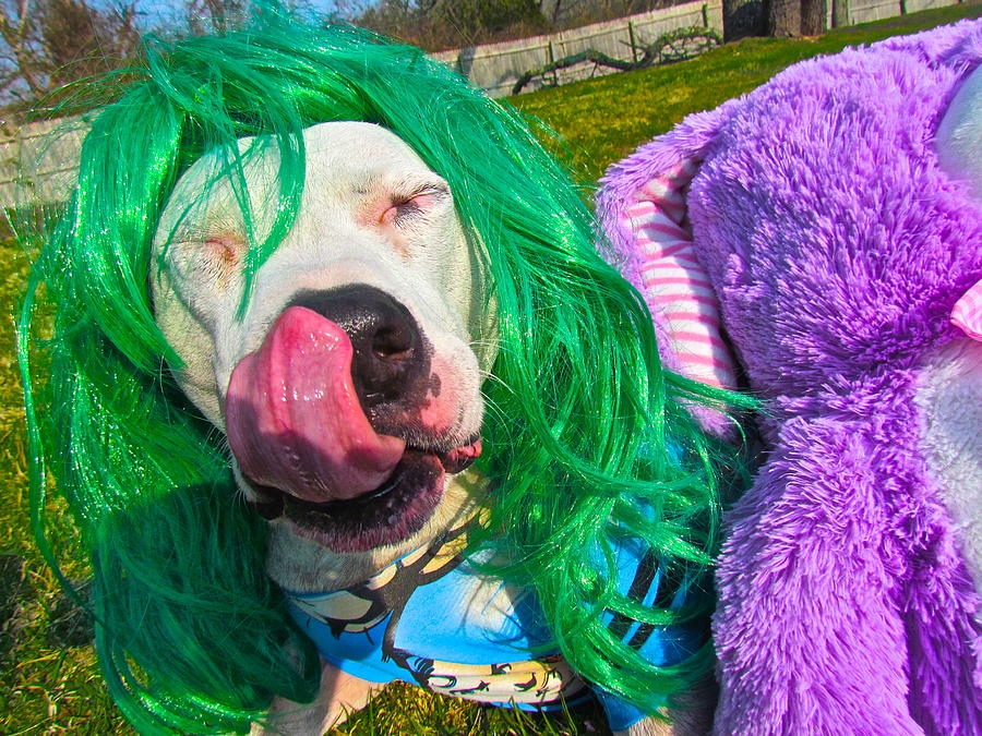 Pit Bulls Photograph - End Bsl You Cant Arrest Me Cause Im Lady Gaga by Qs House of Art ArtandFinePhotography
