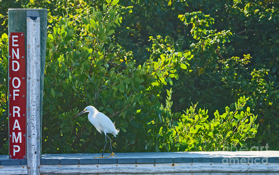Port Charlotte Photograph - End Of Ramp by Anne Kitzman
