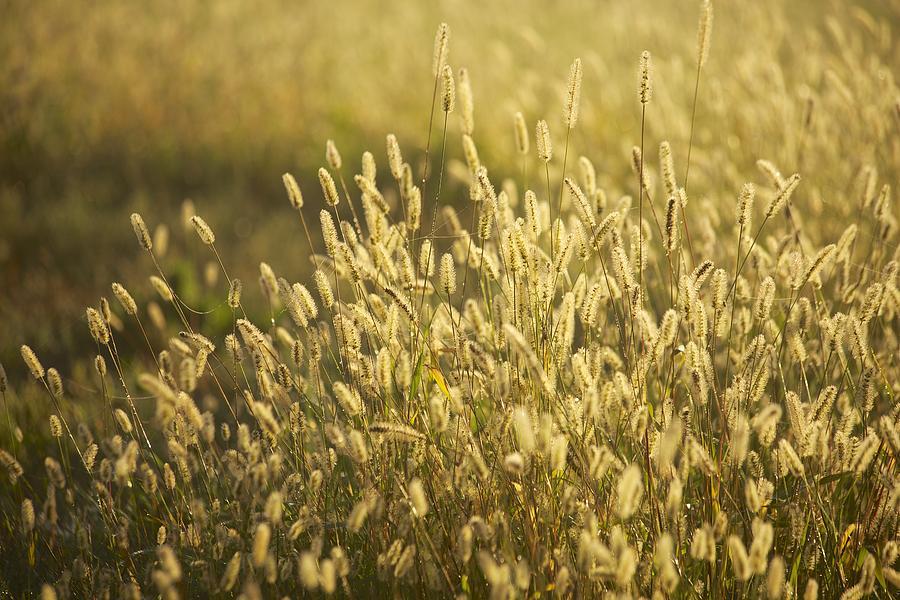 Grass Photograph - End Of Summer by Allan Morrison