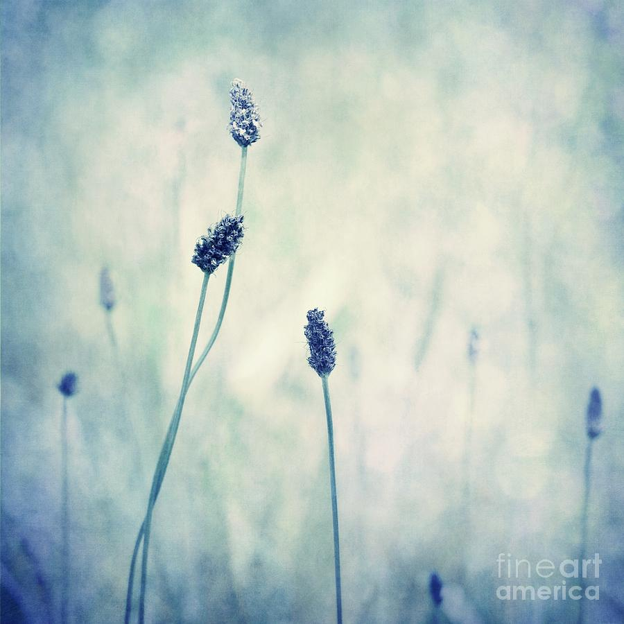 Blue Photograph - Endearing by Priska Wettstein