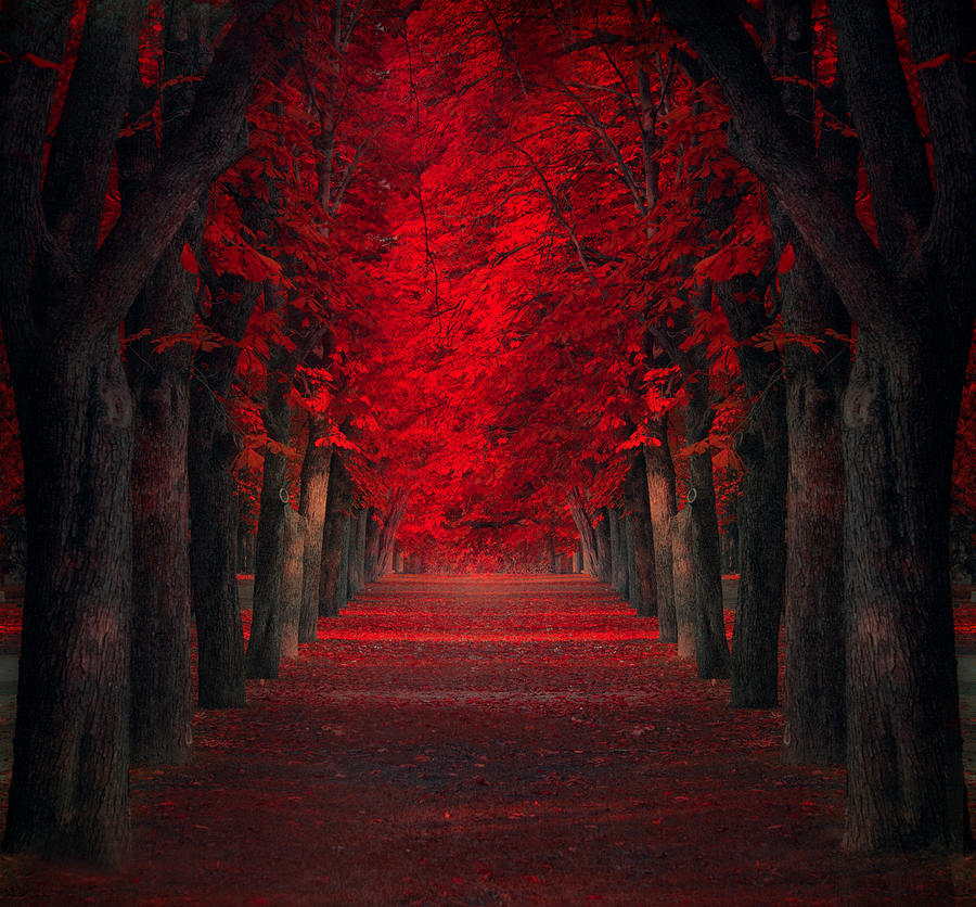 Creative Edit Photograph - Endless Passion by Ildiko Neer