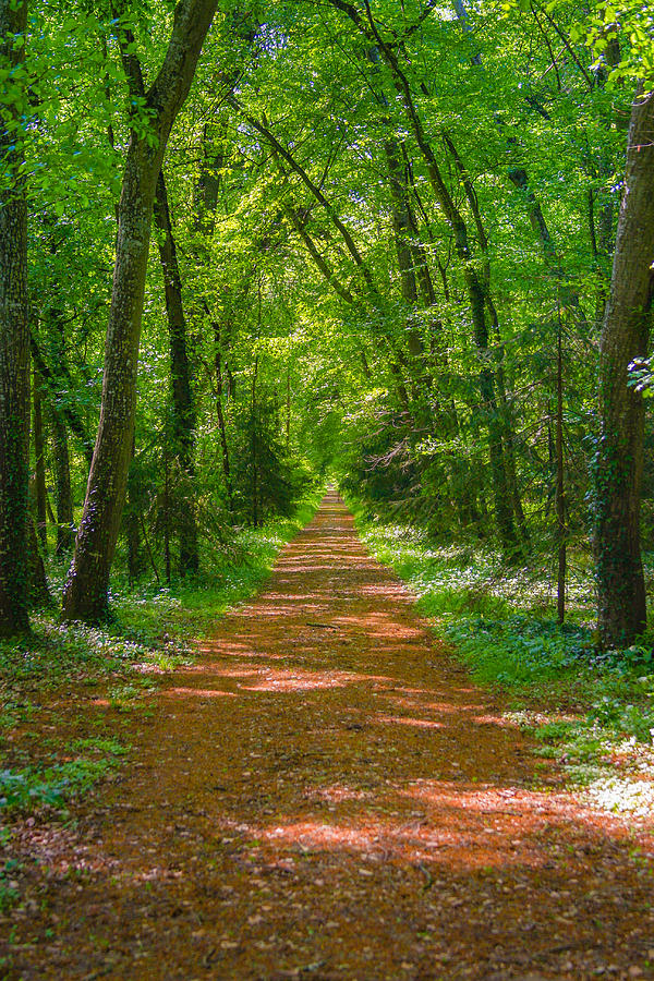 Forest Photograph - Endless Trail Into The Forest by Nila Newsom