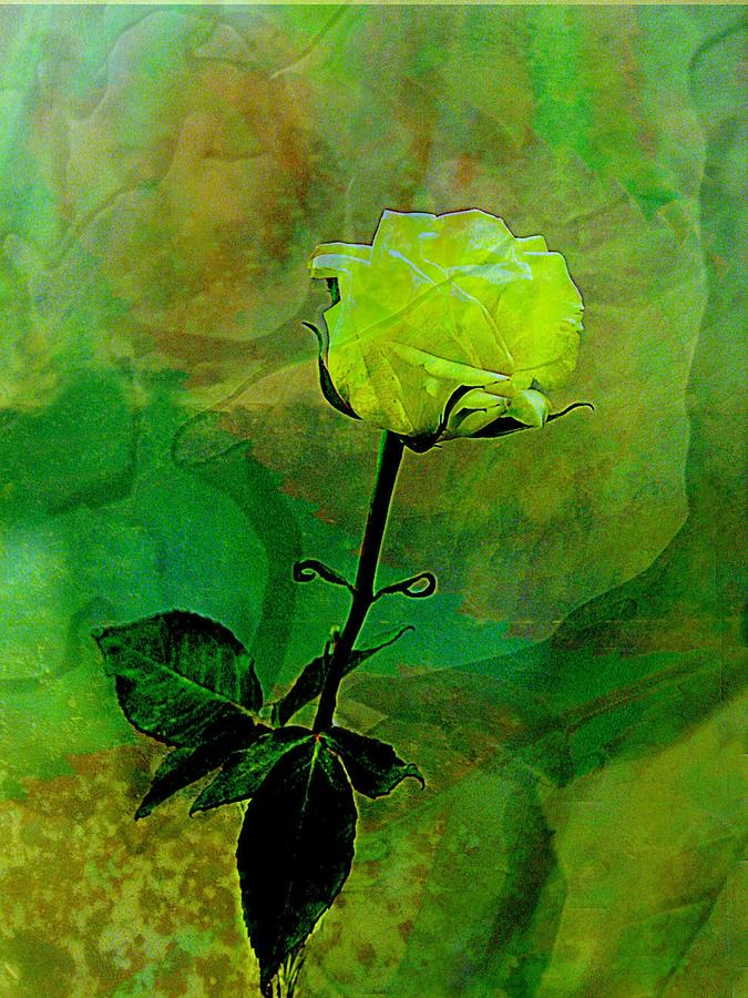 Rose Photograph - Enduring Yellow Rose by Shirley Sirois