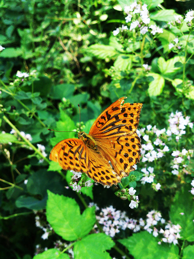 Butterfly Photograph - Energy by Lucy D