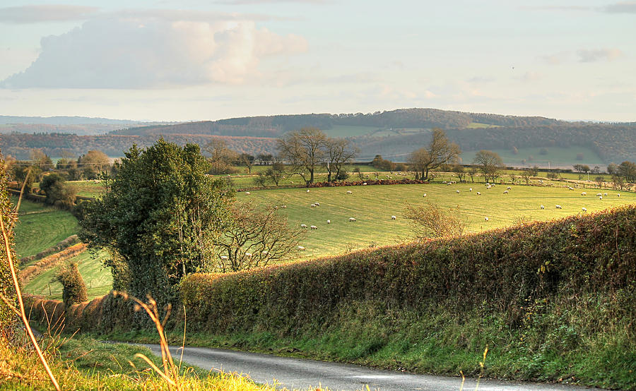 English Countryside in Early Winter by Sarah Broadmeadow-Thomas