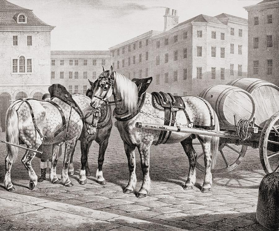 English Drawing - English Farm Horses, 1823 by French School