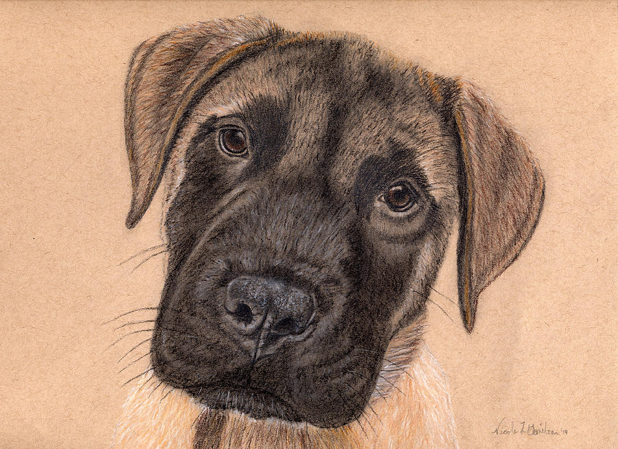 Puppy Drawing - English Mastiff Puppy by Nicole I Hamilton