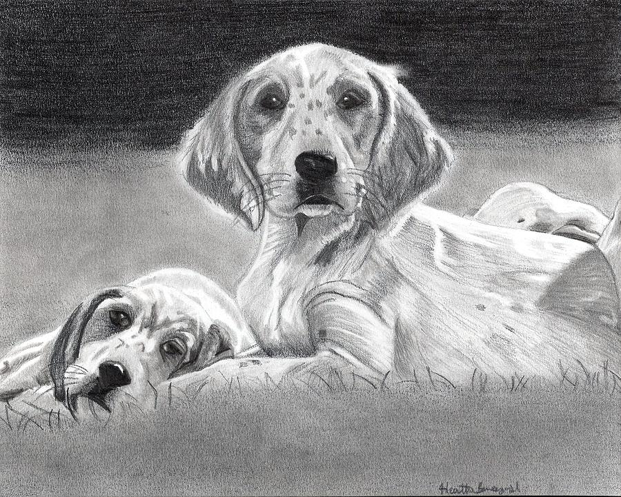 English Setter Puppies Dog Drawing by Olde Time  Mercantile