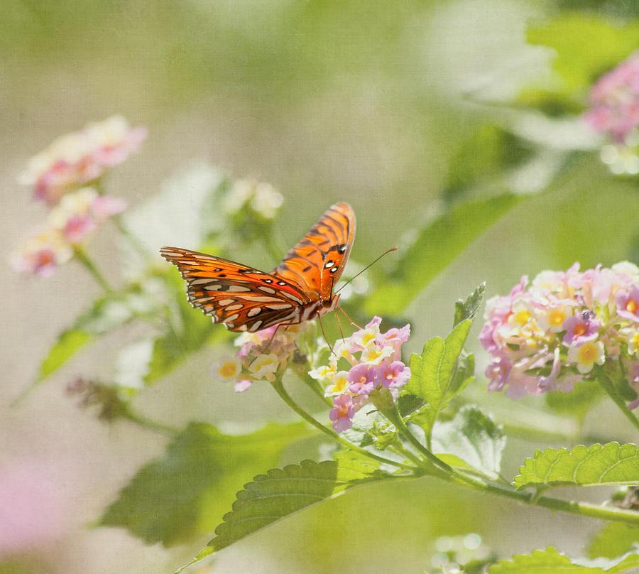 Enjoy The Little Things Photograph By Kim Hojnacki
