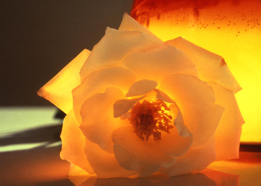 Botanical Photograph - Enlightend by Etti PALITZ