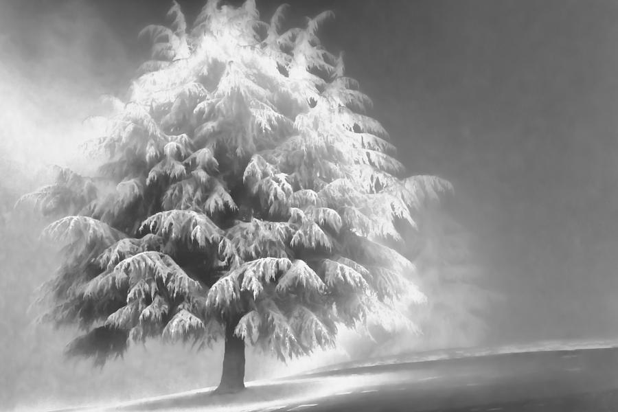 Beauty Photograph - Enlightened Tree by Don Schwartz