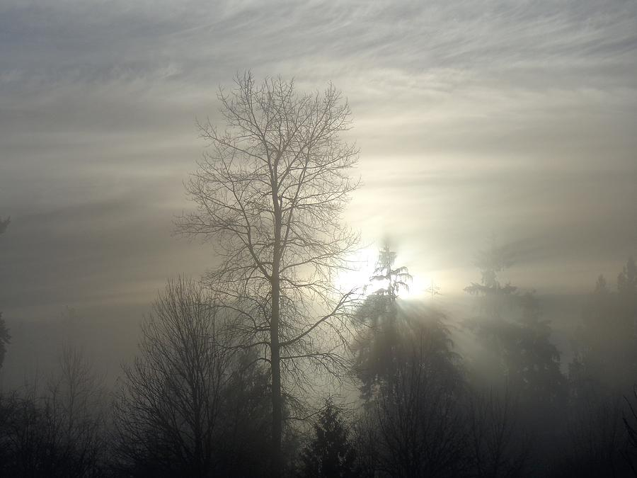 Fog Of Enlightenment - Maple Ridge, British Columbia Photograph