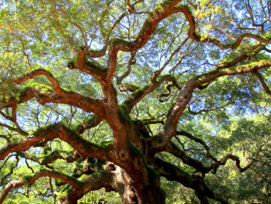 Charleston Photograph - Entangled Beauty by Karen Wiles
