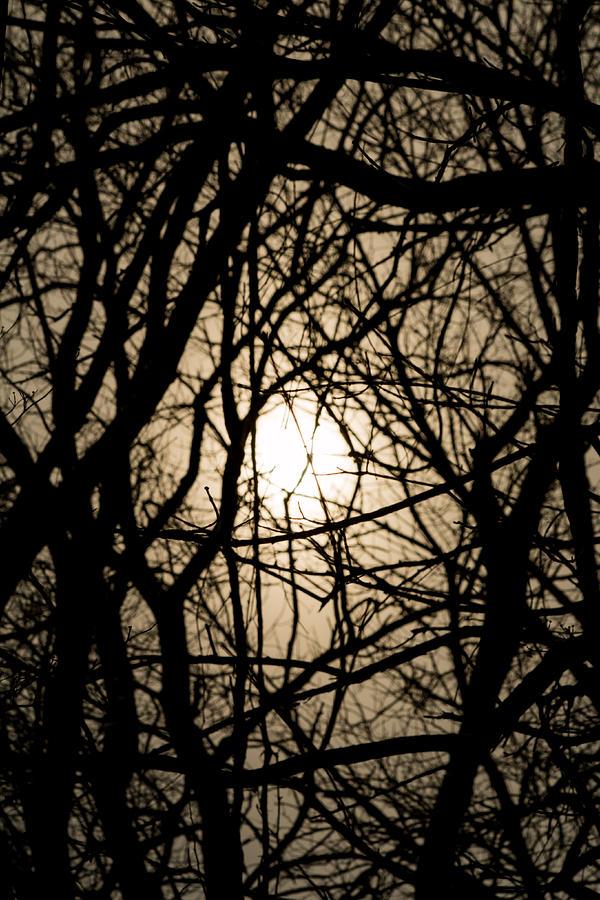 Entangles Photograph - Entangled by Gaurav Singh