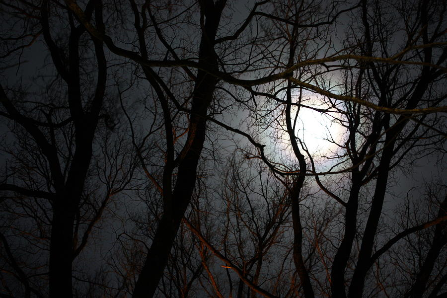 Entangled In The Moonlight Photograph by Judy Powell