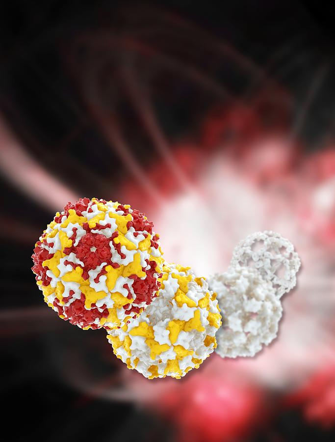 Artwork Photograph - Enterovirus Capsid Proteins Structure by Science Photo Library