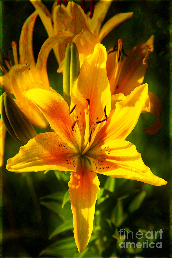 Enticing Bloom Of Yellow And Orange Lilies Garden Art By Omaste Photograph