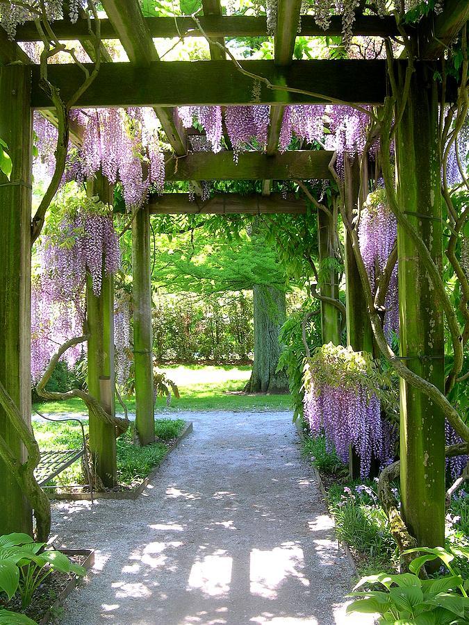 Garden Trellis Photograph - Entranceway To Fantasyland by Susan Maxwell Schmidt