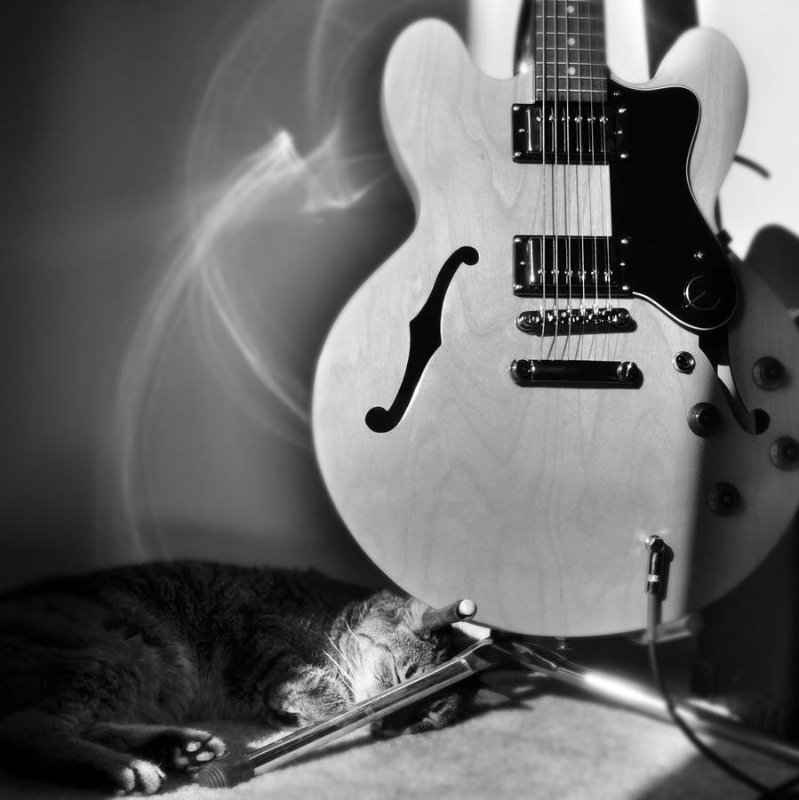 Cat Photograph - Epiphone Cat by Kurt Bonnell