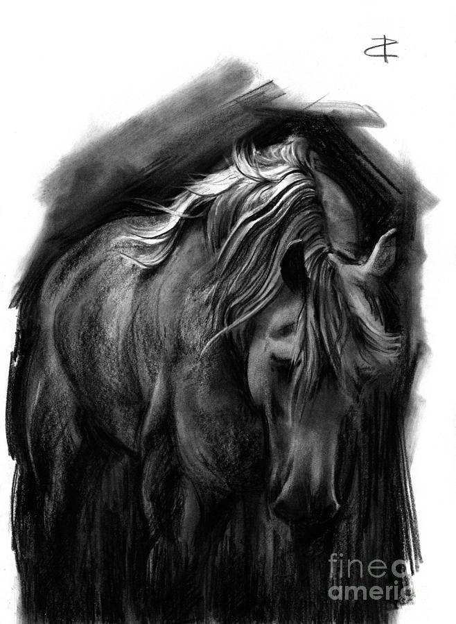 Equine 1 Drawing