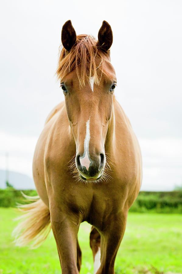 Equine Beauty Photograph by Dageldog