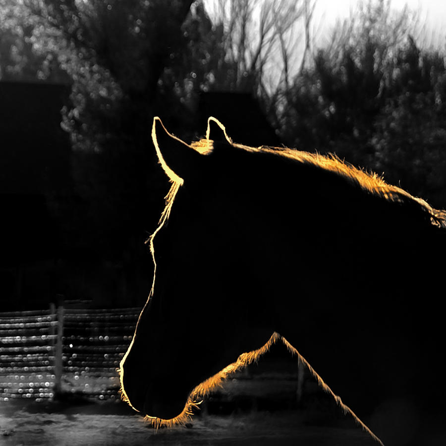 Horses Photograph - Equine Glow by Steven Milner