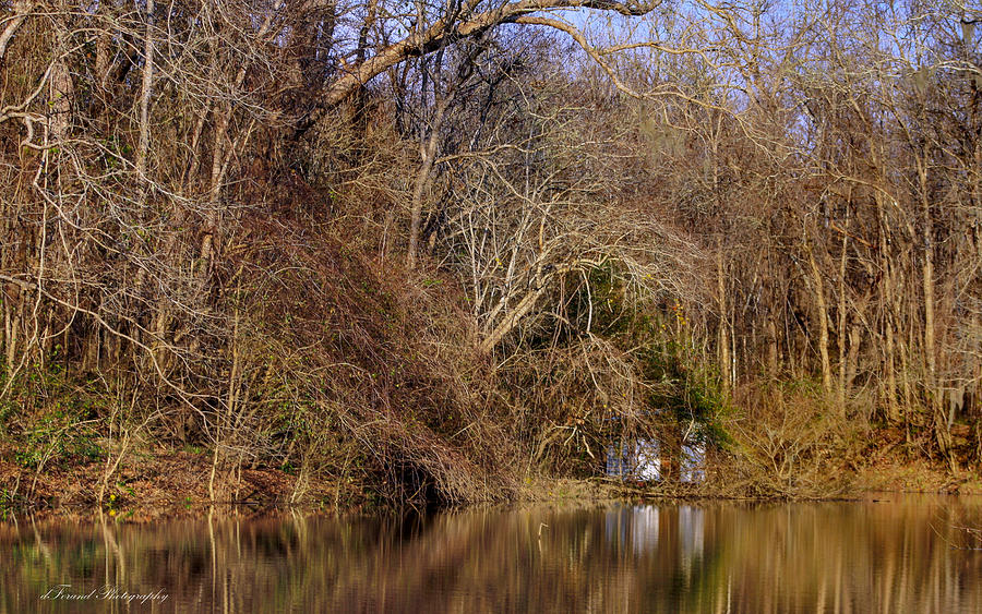 River Photograph - Escape From Reality  by Debra Forand