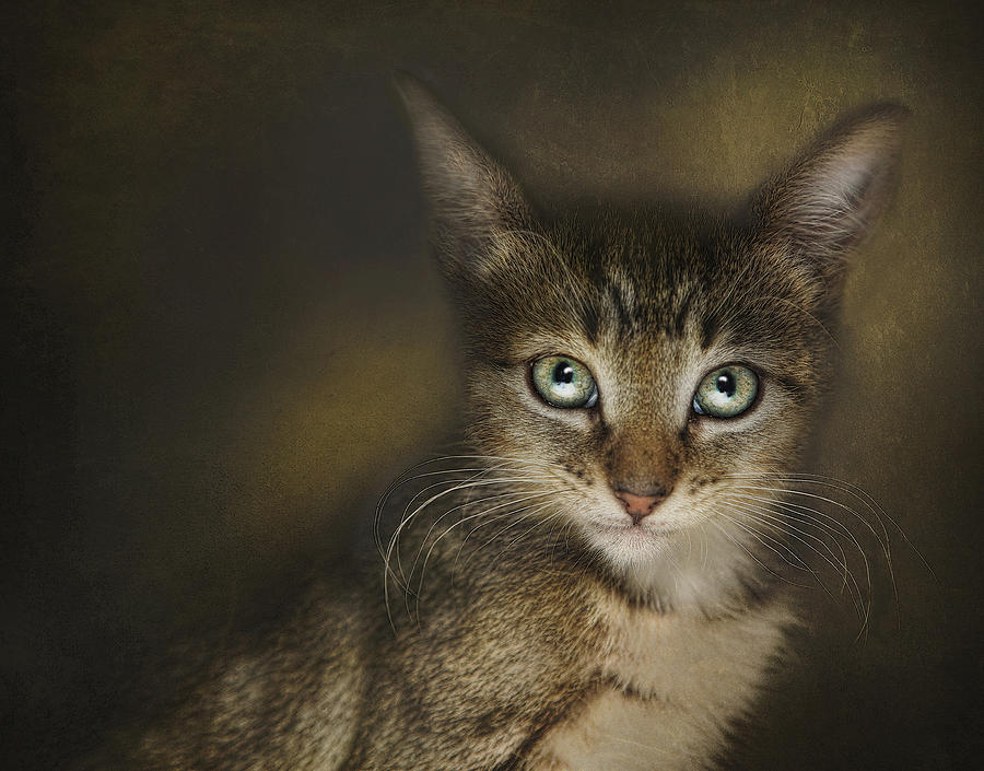 Kittens Photograph - Esmarelda by Pat Abbott