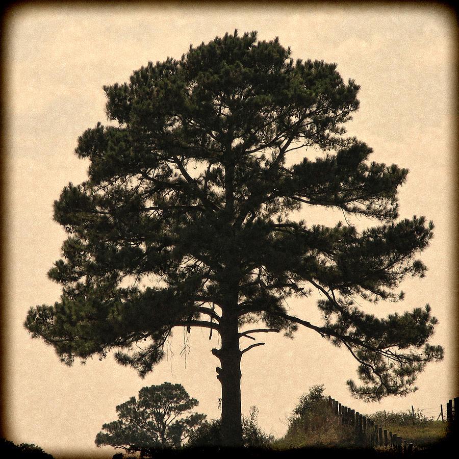 Landscape Digital Art - Essential Pause by Wendy J St Christopher