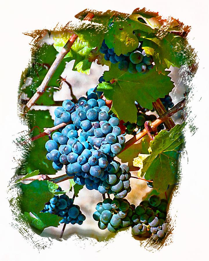 Wine Grapes Digital Art - Estate Grown II by Ken Evans