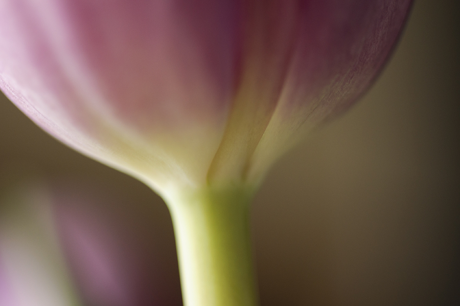 Abstract Floral Photograph - Ethereal Curvature by Christi Kraft