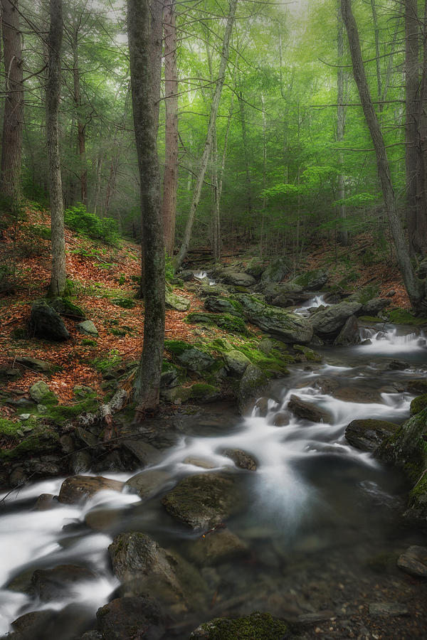 Massachusetts Photograph - Ethereal Forest by Bill Wakeley