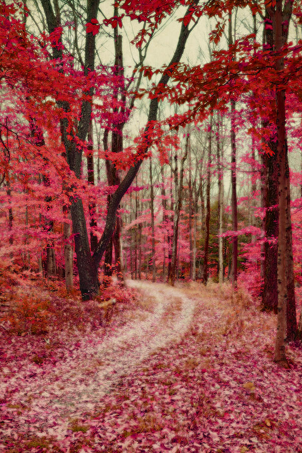 Vertical Photograph - Ethereal Forest Path With Red Fall Colors by Brooke T Ryan