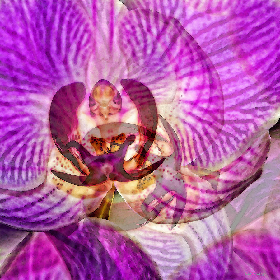 Orchid Painting - Ethereal Orchid By Sharon Cummings by Sharon Cummings