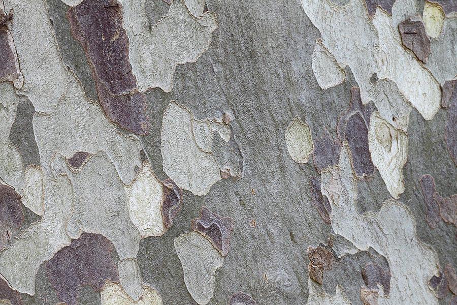 Eucalyptus Tree Bark Full Frame Photograph by Tom And Steve